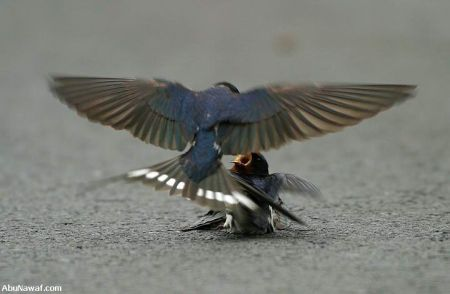 http://www.muruganad.com/fw/images/bird2.jpg