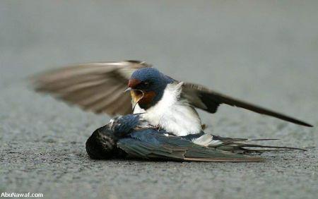 http://www.muruganad.com/fw/images/bird4.jpg
