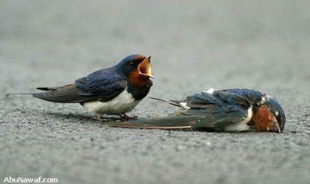 http://www.muruganad.com/fw/images/bird5.jpg